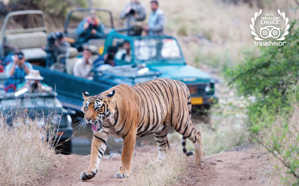 4 Unbeatable Safari Holidays in India