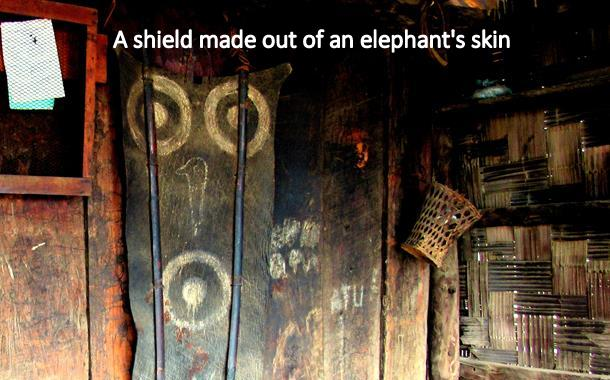 A sheild made out of an Elephant Skin