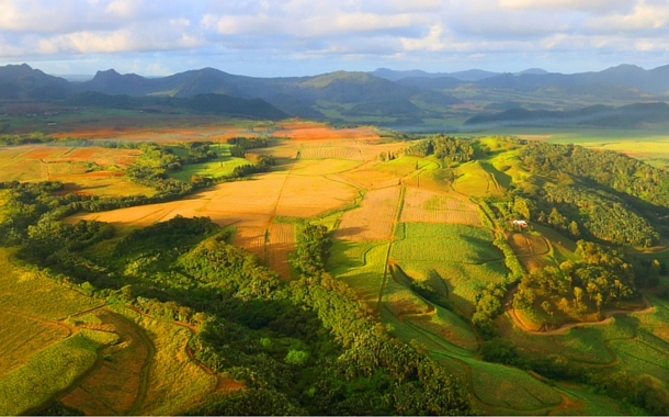 Aerial view of sugar cane fields, Mauritius