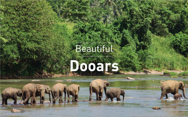 Beautiful Dooars