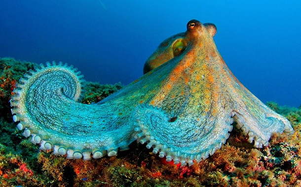 Caribbean Sea Animal Life: The Underwater World In Malaysia