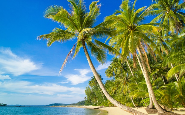 Coconut Trees, Kerala