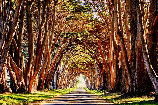 Cypress Tunnel, Point Reyes, California