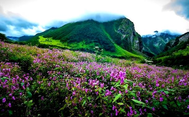 flowers-in-yumthang-valley