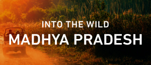 Into the wild, Madhya Pradesh