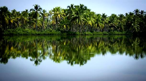 Kavvayi backwaters
