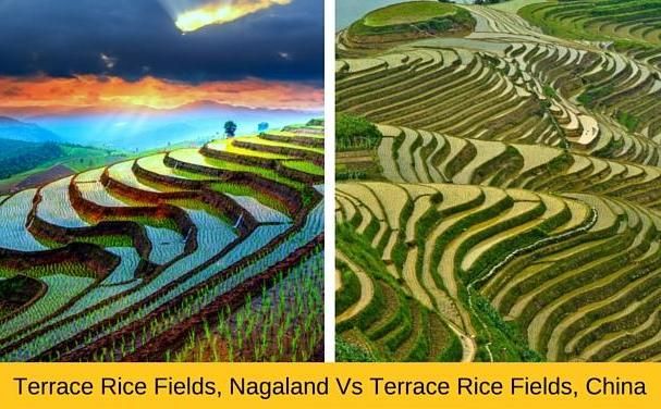 Khonoma rice fields, Nagaland