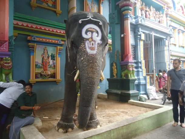 Lakshmi Elephant in Pondicherry