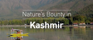 Nature's Bounty in Kashmir