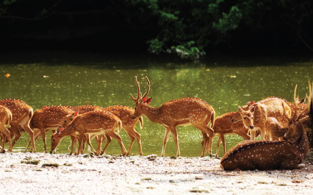 Sunderban National Park, West Bengal