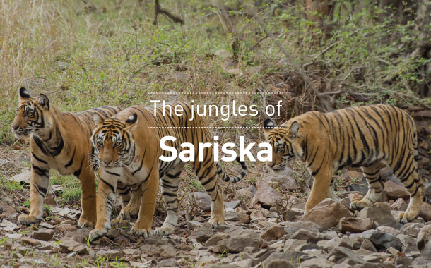 The jungles of Sariska
