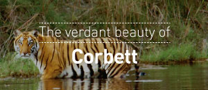 Verdant beauty of Corbett