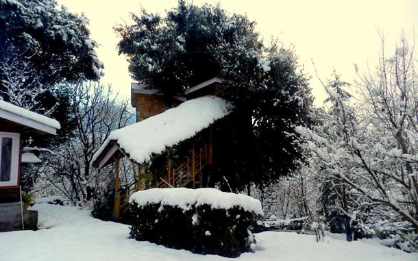 Tree House Cottage, Kullu