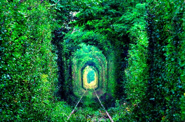 Tunnel of Love formed by trees in Ukraine