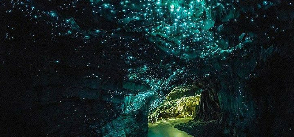 Waitomo Caves, New Zealand