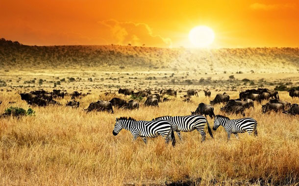 Wildlife of Kenya