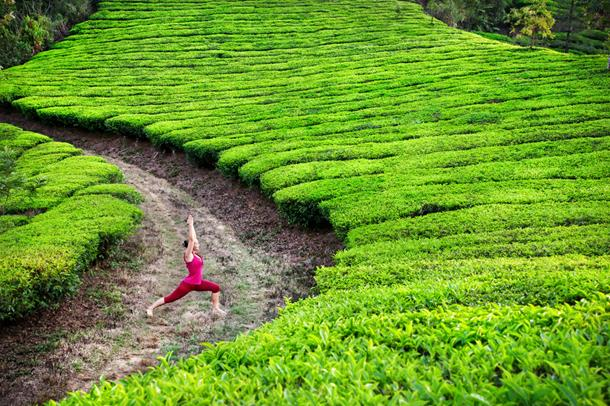 Yoga in the tea gardens of Kerala