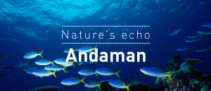 Nature's Echo: Andaman